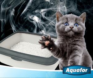Kot załatwia się poza kuwetą. Jaka może być tego przyczyna?