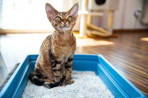 Read more about the article Jak wyeliminować przykre zapachy z kuwety dla kota?